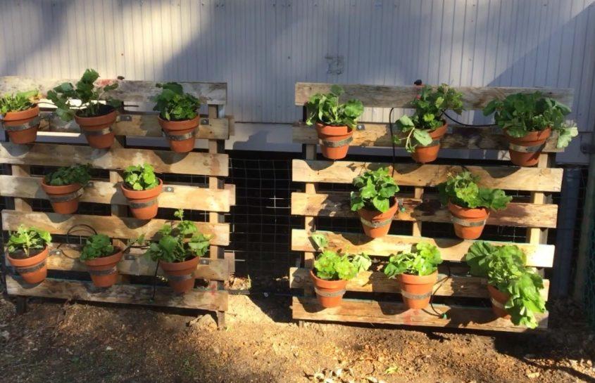 Progress in the Garden